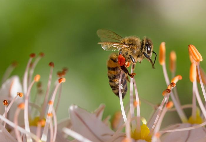 Les abeilles la ruche pédagogiques et l'apiculteur