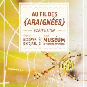 Au fil des araignées - Exposition