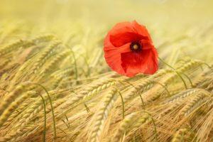 L'HISTOIRE DES PLANTES CULTIVEES