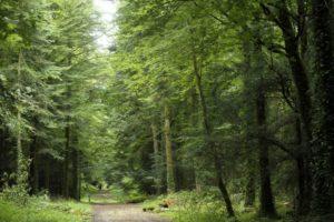 Noz Trail Croas Joncour