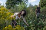 Stage : La permaculture au jardin, journée découverte La Pâture es Chênes