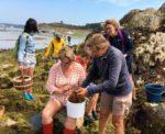 Sortie cuisine aux algues Île Callot