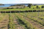 cabane aux longues vignes
