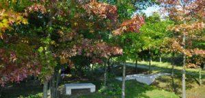 Arboretum Arboretum