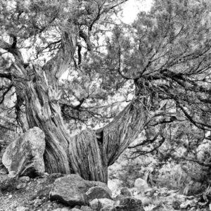 """Exposition """"Portraits d'arbres"""" Arsenal de la place forte de Mont-Dauphin"""