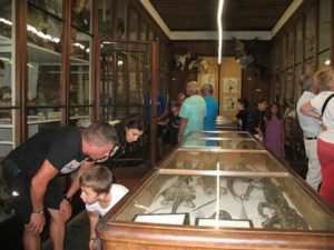 Visite libre Société d'histoire naturelle de la Savoie - Museum