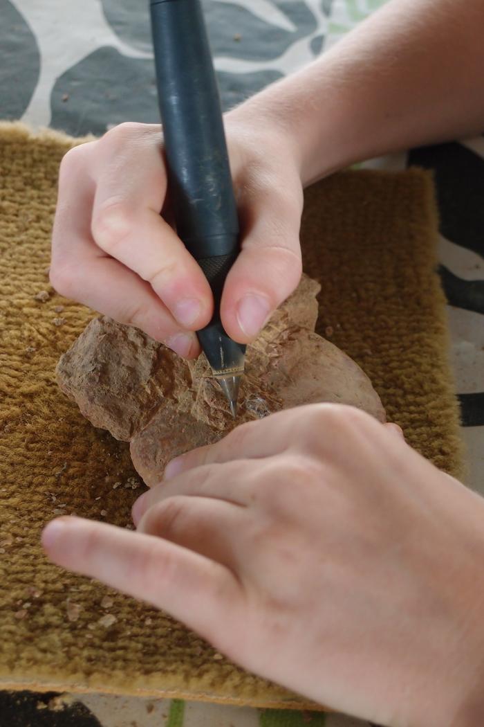 Comment dégager un fossile Espace Pierres Folles