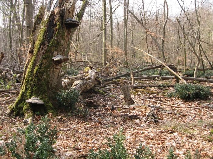 Crise du logement en forêt ? Biodiversité