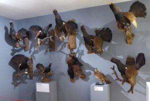 """Exposition """"Biodiversité"""