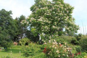Jardin à   l'anglaise Un jardin pour tous les sens