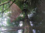Karen Macher Nesta Adaptation to Nature Forest-Sur-Marque
