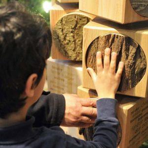 La forêt du Chablais s'adapte aux changements climatiques Médiathèque de Thonon