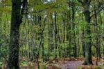 La nature ensoleillée Entrée sud-est du bois de Boissy
