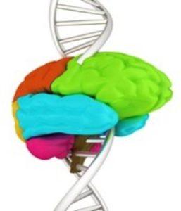 La Neurogénétique en Image Village des Sciences à l'Hôtel de Ville de TOURS