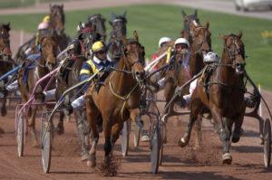 Les coulisses de l'hippodrome de Lyon-Parilly pendant les courses Hippodrome de Parilly