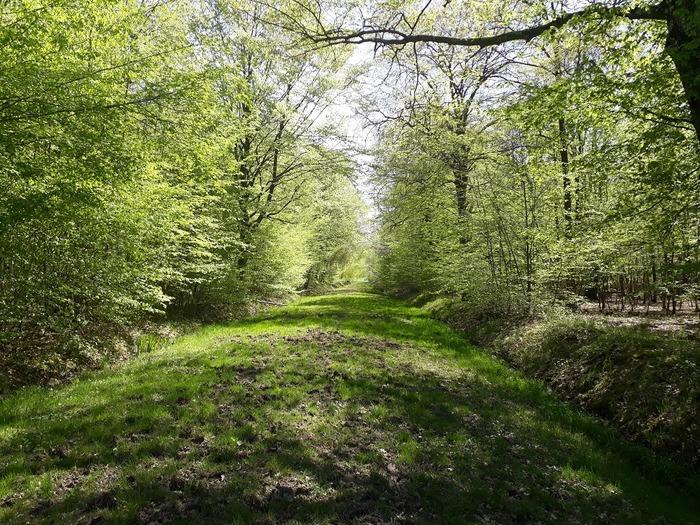 L'Histoire de la forêt .RDV sur le parking du gymnase Georges Chanu