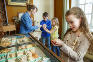 Visite et atelier créatif - Des Naturalia au musée : coquillages et papillons Musée Gallé-Juillet