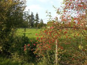 Petite randonnée dans un site remarquable Vallée du ru d'Ouville