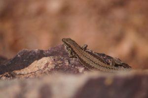 Rendez-vous avec les reptiles Etang de Beau Soleil