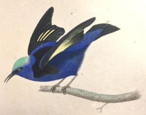 Si votre ramage se rapporte à votre plumage... Bibliothèque municipale Jacques Lacarriere