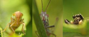 Stand de présentation de l'Institut de Recherche sur la Biologie de l'Insecte Village des Sciences à l'Hôtel de Ville de TOURS