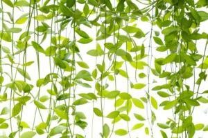 Un rideau végétal au Relais nature Ferme du Héron
