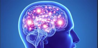 Venez découvrir comment fonctionne votre cerveau !  Explorez votre mémoire et découvrez les mécanismes de la douleur Village des sciences au CNRS d'Orléans (45)