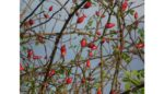 SORTIE - NATURE : FRUITS SAUVAGES