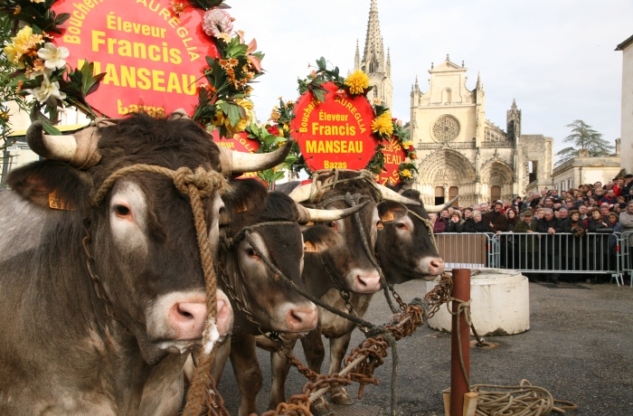 Fête des Boeufs Gras de Bazas Bazas   2020-02-20