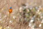 """""""Initiation à l'Ornithologie""""-Réserve naturelle du Marais d'Orx LABENNE 2020-02-19"""