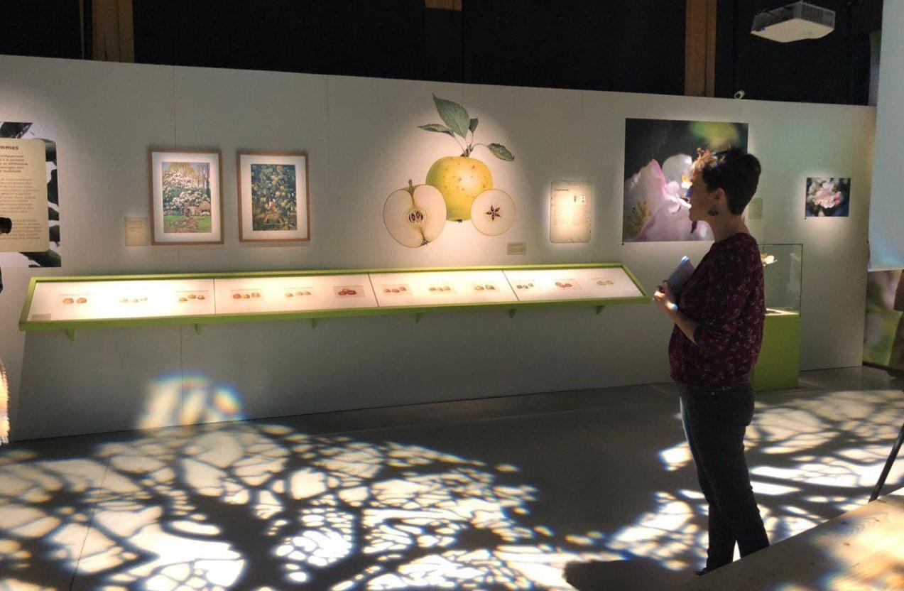 expo pom pom pommes