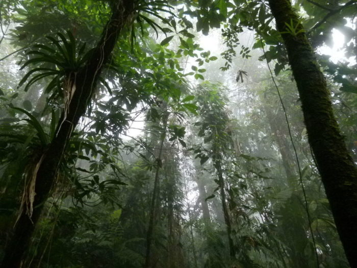 Forêt colombienne