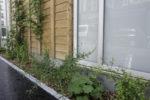 """Permis de Végétaliser """"Conseils et pratiques"""" Maison du Jardinage - Pôle ressource Jardinage Urbain"""
