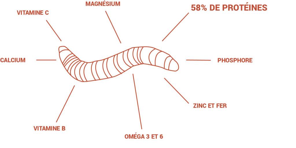 reglo-croquettes-insectes_Basile-Laigre2
