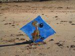 Balade découverte sur la plage d'Hermanville Hermanville-sur-Mer