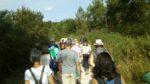 Annulée - La forêt de Migelane Martillac   2020-12-05