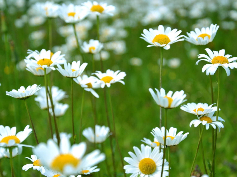 Marché aux fleurs & vide-greniers Cubzac-les-Ponts   2020-04-26