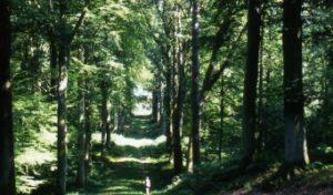 Marche santé en forêt de Retz Villers-Cotterêts