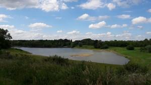 Observation des oiseaux des zones humides du site de Courpain  Jargeau