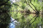 Balade découverte au bord de la Leyre Le Teich