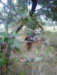 Bricol'nature Biganos