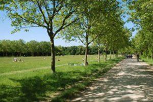 Mon Baptême Sauvage (avec plantes médicinales & comestibles) Bois de Vincennes