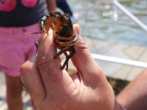 Pêche aux crabes Audenge