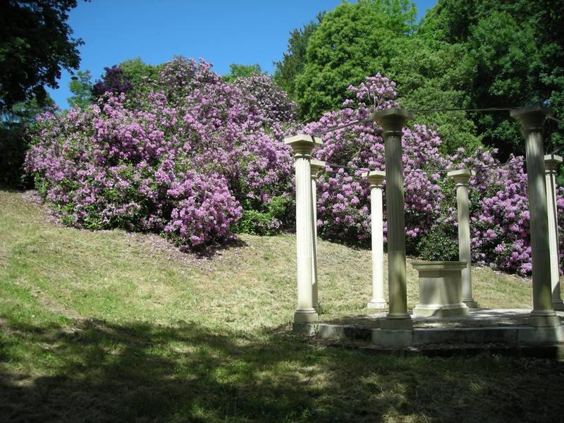 Fête des rhododendrons Châteauneuf-sur-Loire   2021-05-22