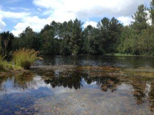 Bains de forêt Biganos