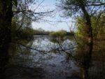 Balade naturaliste : au fil de la Garonne Saint-Macaire