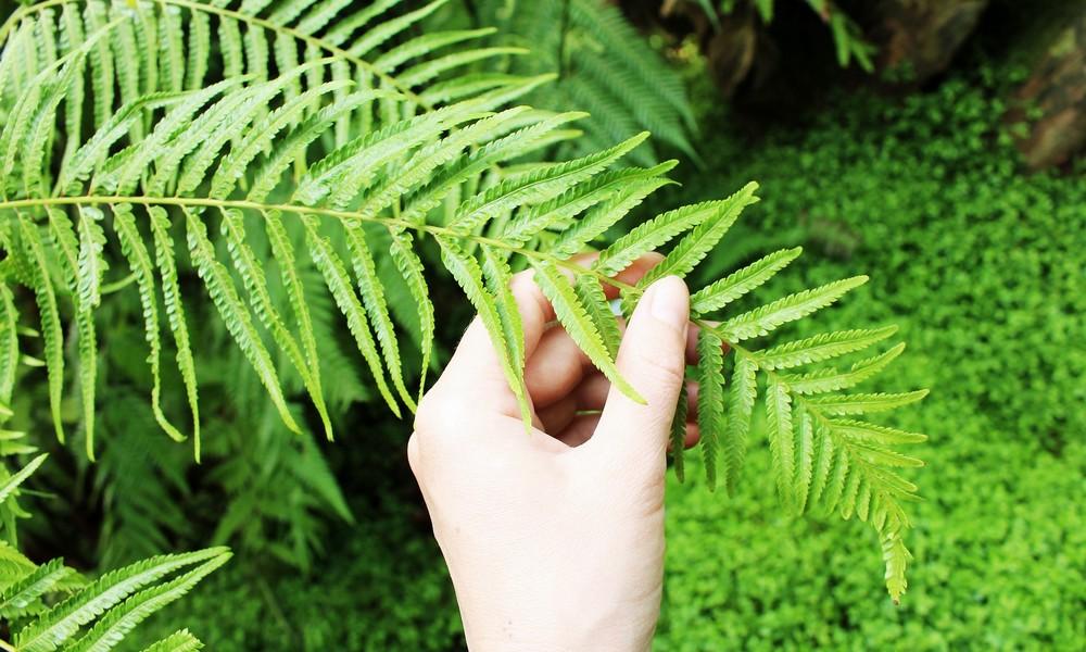 Balade sensorielle au Bois Bertrand Les cinq sens en éveil en plein cœur de la nature Fontenoy