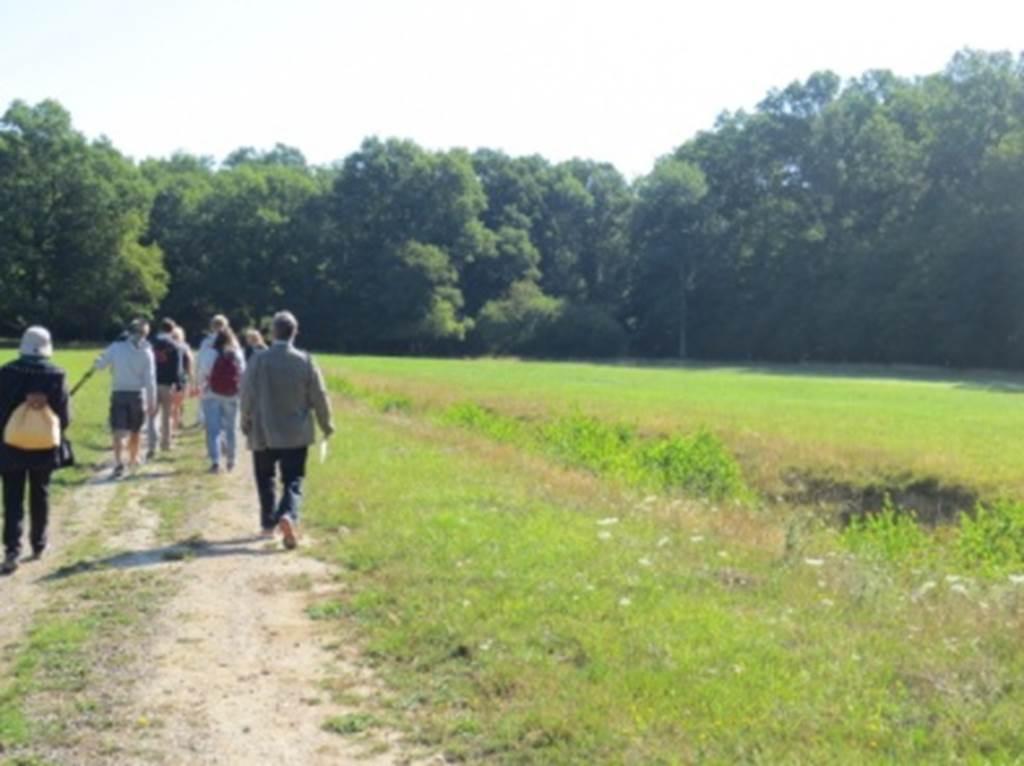 Découverte de la forêt en été Boult-aux-Bois