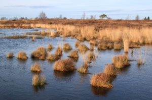 Découverte des zones humides lacustres à Gastes Gastes