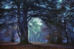 Promenade contée en forêt de Fontainebleau Forêt de Fontainebleau
